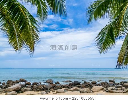 海南三亚岸边的椰子树