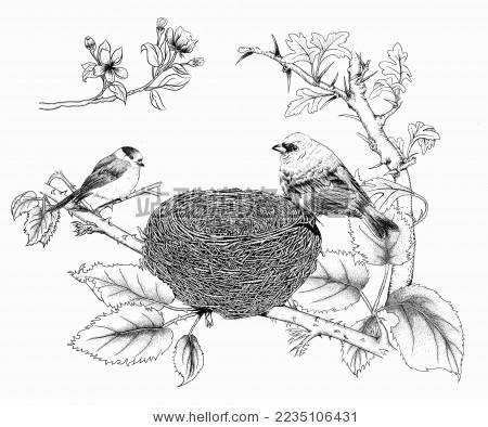 树枝鸟窝简笔画