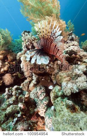 獅子魚和水下風景在紅海