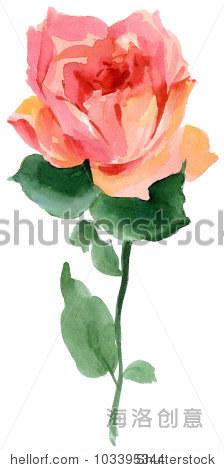 美丽的玫瑰花手画水彩画