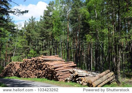木材logging in森林