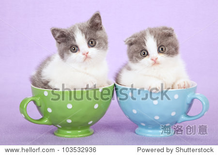 纸杯手工制作大全动物小猫