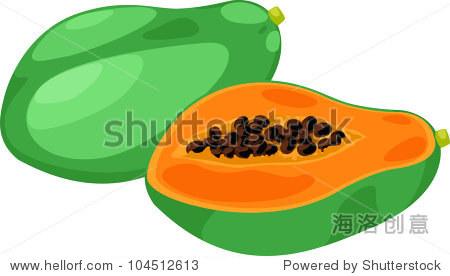 在白色背景插图木瓜矢量文件