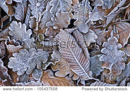一些树叶的纹理在冬天被冰雪覆盖