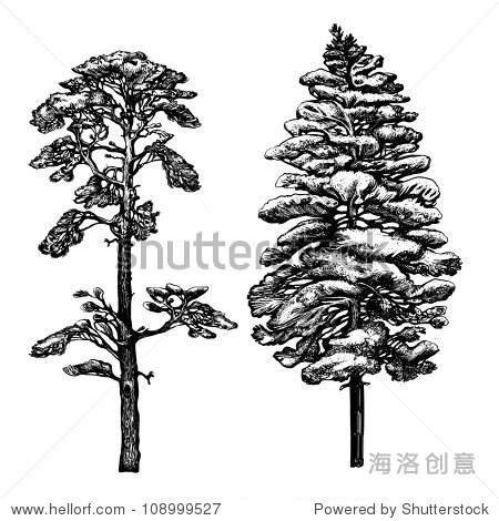 插图,画松树墨水和钢笔梳理作为模仿的雕刻和植物的成分