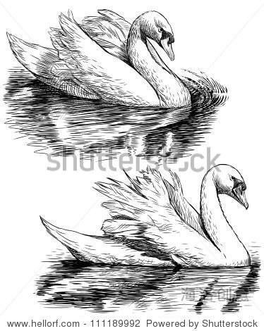 铅笔画动物天鹅