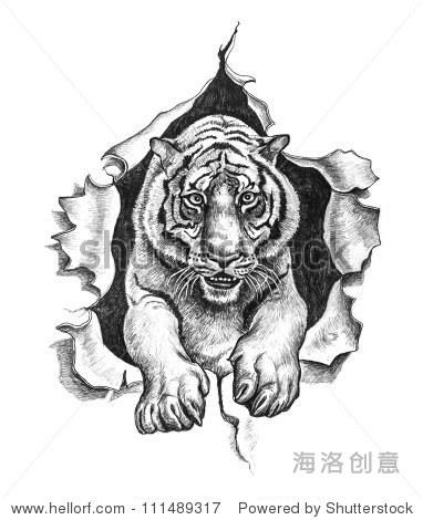 铅笔画一只老虎 - 动物/野生生物,艺术 - 站酷海洛,,.