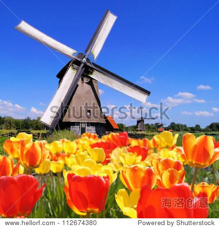 传统的荷兰风车前景充满活力的郁金香,荷兰