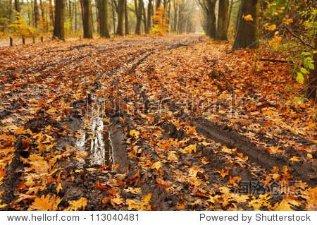 泥泞的道路——森林路上泥潭秋天树叶