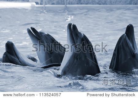 在水族馆有酒糟鼻子的海豚.特写镜头