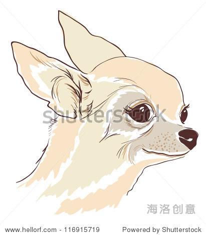 华素描可爱的吉娃娃狗,孤立 - 动物/野生生物,自然