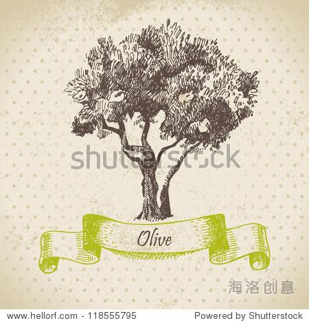 橄榄树.手绘插图