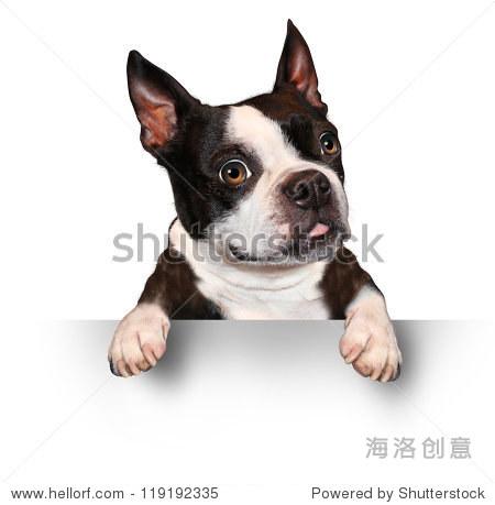 壁纸 动物 狗 狗狗 450_459