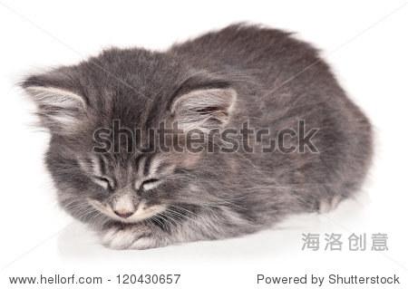 可爱的小猫咪孤立在白色背景睡着了 - 动物/野生生物