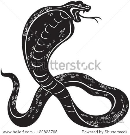 矢量插图的眼镜蛇蛇,黑白风格