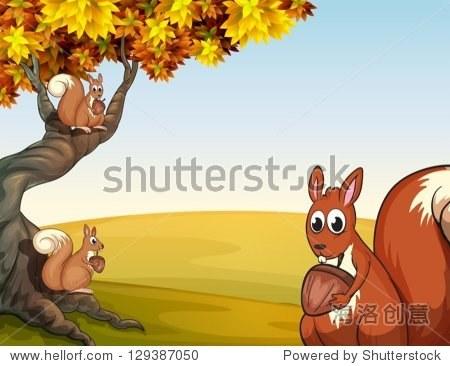说明三个松鼠的坚果在那棵大树