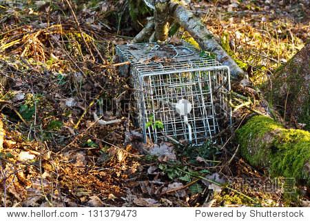 非致命或人道钢铁动物陷阱捕捉小型哺乳动物用于标记