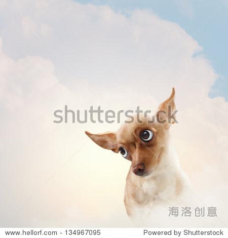 有趣的狗肖像光背景.拼贴画.