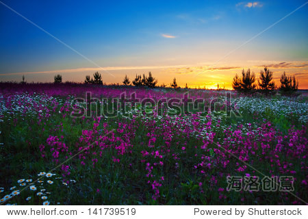 sunrise over a blossoming field