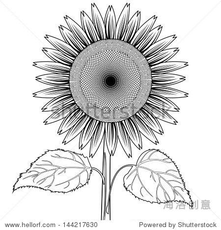 向日葵的叶子行向量-背景/素材,自然-站酷海洛创意,,.