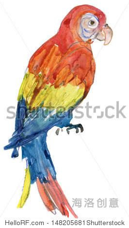 鹦鹉.水彩图片 - 动物/野生生物,艺术 - 站酷海洛创意