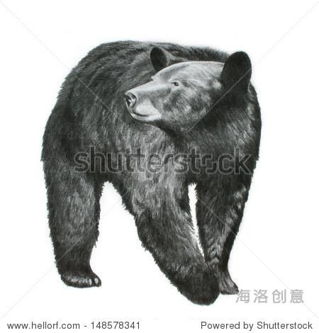 手绘黑熊插图孤立在白色背景,野生动物或自然画素描,大黑熊,大耳朵和