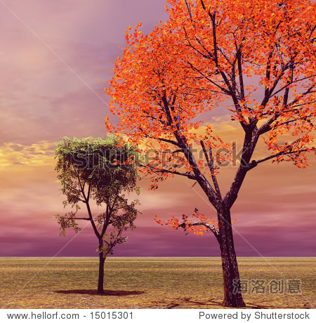 秋天的风景 公园 户外