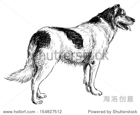 斑点狗-动物/野生生物,自然-海洛创意正版图片,视频