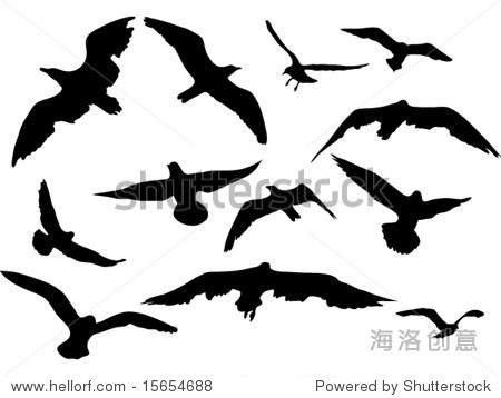 各种飞行动物