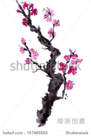 现实的樱花开花——日本樱桃树孤立在白色背景