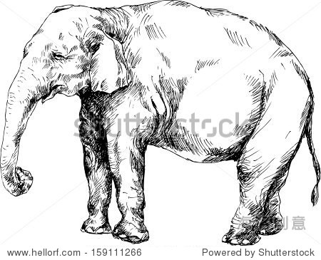 素描画大象步骤