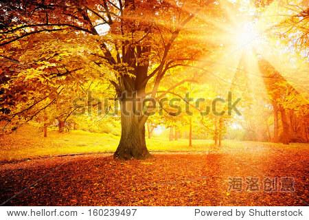 秋天的风景 - 自然,公园/户外 - 站酷海洛创意正版