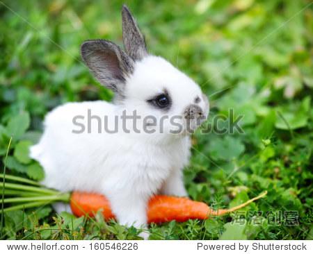 有趣的小白兔在草一根胡萝卜 - 动物/野生生物,自然