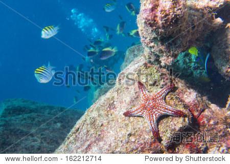 海星在礁五彩缤纷的海底景观背景 - 动物/野生生物