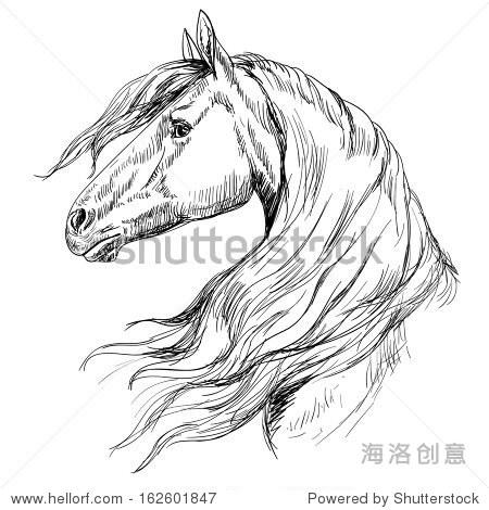 马的头,素描风格 - 动物/野生生物,假期 - 站酷海洛