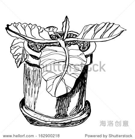 室内盆栽植物的黑白平面草图(sinningia),墨水