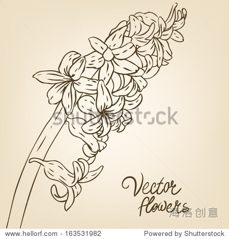 风信子:复古手绘背景用鲜花.矢量插图.