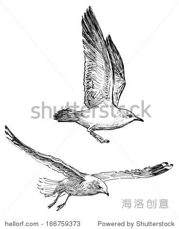 会飞的鸟 - 动物/野生生物,自然 - 站酷海洛创意正版