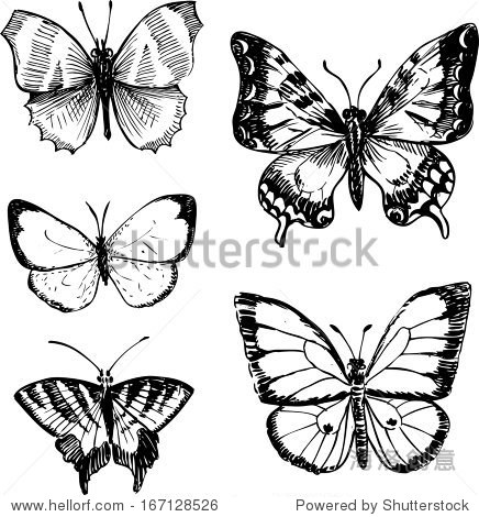 蝴蝶,墨水畫畫,矢量插圖