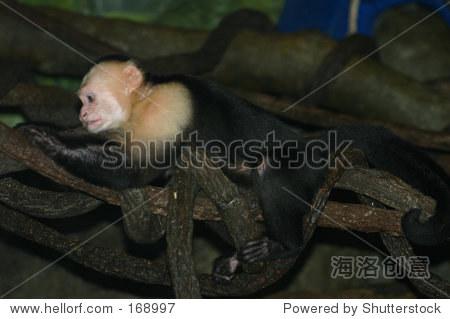 布朗克斯动物园的猴子