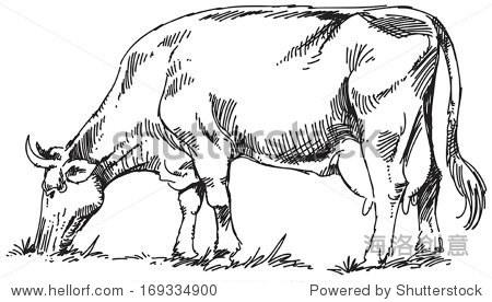 牛的黑白素描. - 动物/野生生物 - 站酷海洛创意正版