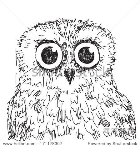 股票猫头鹰矢量手绘插图