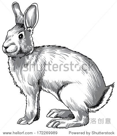 黑白的素描一个可爱的兔子.