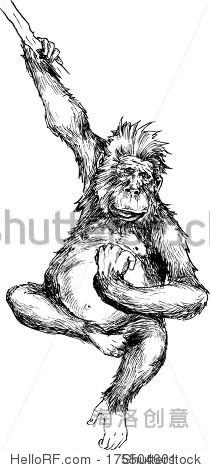 素描画步骤猴子