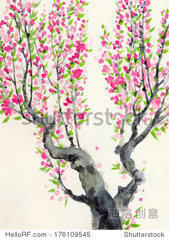水彩背景.红色的花和绿色的树叶在春天盛开的老树
