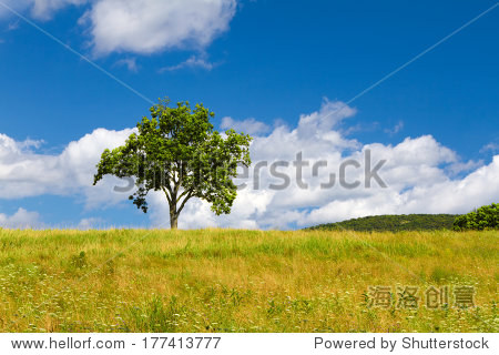 美丽的夏天风景与一棵孤独的树