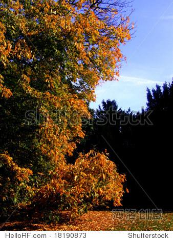 秋天的风景 - 公园/户外,其它 - 站酷海洛创意正版