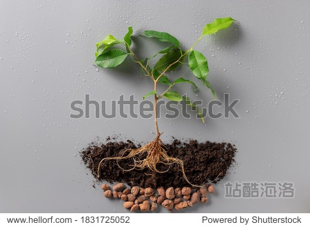 young green plant with soil and drainage on gray background with water drops. Concept of the environment World Earth Day. New life plant. flat lay