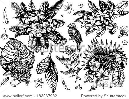 美丽的热带植物2集合(黑白向量eps10涂鸦) - 物体