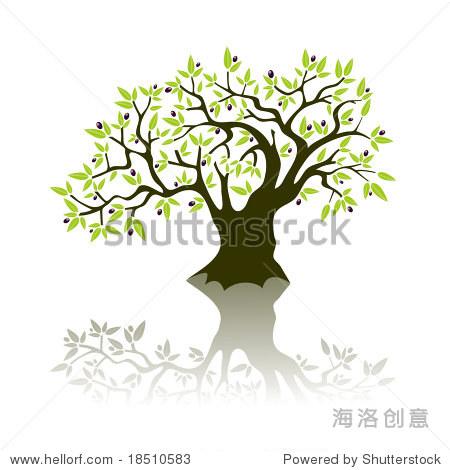 绿色的橄榄树矢量插图,橄榄和树叶.